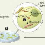 Gene Editing Reaches Plant Mitochondria